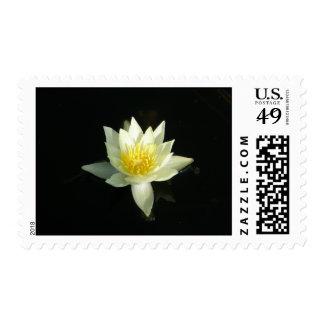 Lirio de agua blanca/Lotus Sello