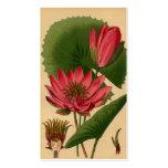 Lirio de agua botánico del rosa de la impresión de plantilla de tarjeta de visita