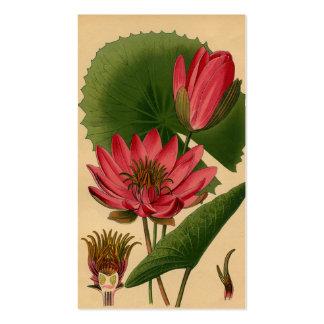 Lirio de agua botánico del rosa de la impresión