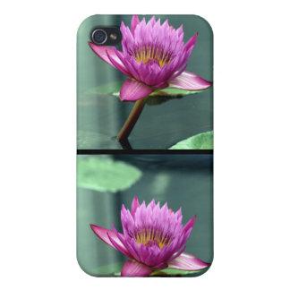 Lirio de agua de las rosas fuertes iPhone 4 protectores