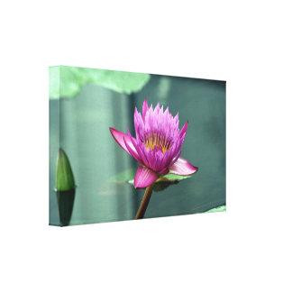 Lirio de agua de las rosas fuertes impresión en lienzo