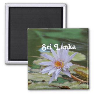 Lirio de agua de Sri Lanka Imán Cuadrado
