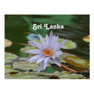 Lirio de agua de Sri Lanka Tarjeta Postal