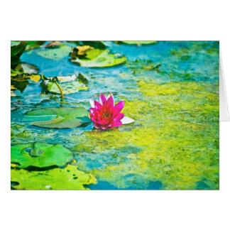 Lirio de agua Lilypad