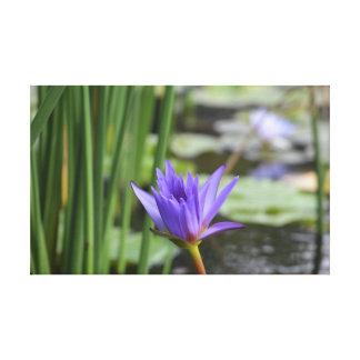 Lirio de agua púrpura impresión en lienzo