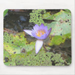 Lirio de agua púrpura Mousepad Alfombrillas De Ratones