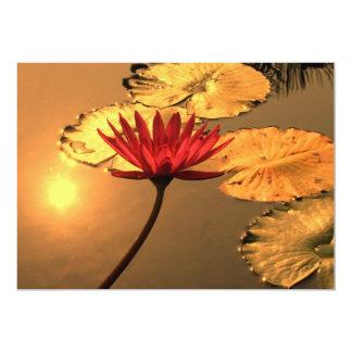 """Lirio de agua radiante con el Sun que refleja Invitación 5"""" X 7"""""""