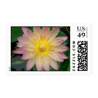 Lirio de agua rosada y amarilla sello postal