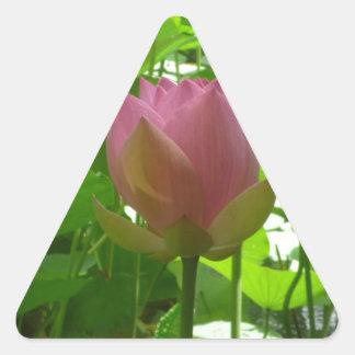 Lirio de agua rosado - ahora abriéndose pegatina triangular