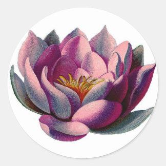 Lirio de agua rosado antiguo de Botanicals Lotus Pegatina Redonda