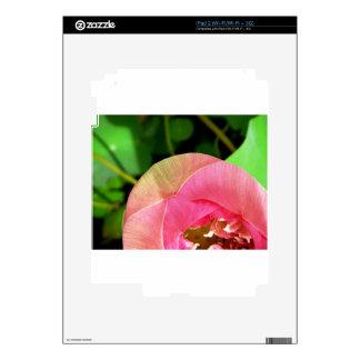 Lirio de agua rosado Lotus Calcomanía Para El iPad 2