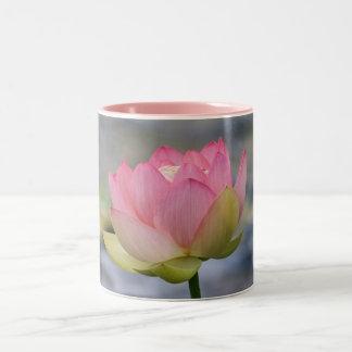Lirio de agua rosado taza dos tonos