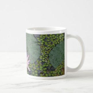 Lirio de agua taza de café
