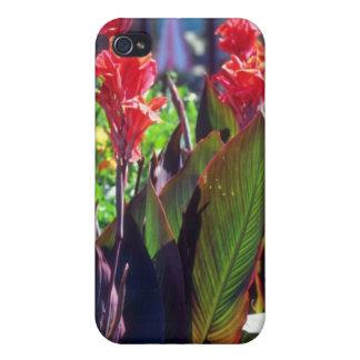 Lirio de Canna anaranjado, (Canna Hybride) flores iPhone 4 Cobertura