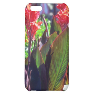 Lirio de Canna anaranjado, (Canna Hybride) flores