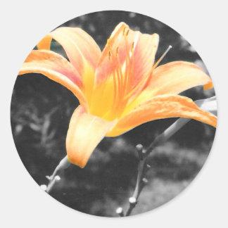 Lirio de día anaranjado pegatinas redondas