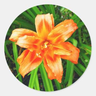 Lirio de día doble anaranjado pegatina redonda