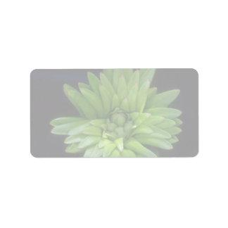 Lirio de florecimiento de la planta etiqueta de dirección