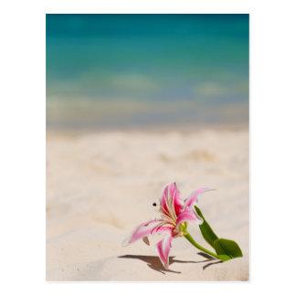 Lirio de la playa tarjetas postales