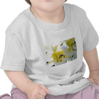 Lirio de Madonna Camisetas