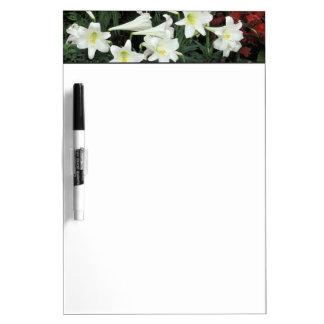 Lirio de pascua (el Lilium regale) Pizarras Blancas De Calidad