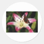 Lirio del Stargazer con la mariposa Etiqueta