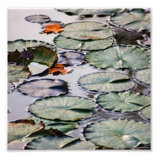 """""""Lirio en el agua en verano"""" por Shawn Tomlinson Cojinete"""