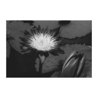 Lirio floreciente impresión en lienzo