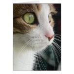 Lirio la tarjeta de felicitación del gato 03