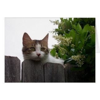 Lirio la tarjeta de felicitación del gato 04