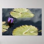 Lirio púrpura impresiones