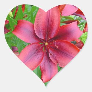 Lirio - rojo iridiscente (12:15 de Lucas) Pegatina En Forma De Corazón