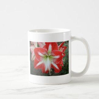 lirio rojo y blanco taza