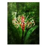 Lirio romántico de la araña roja del vintage tarjetas postales