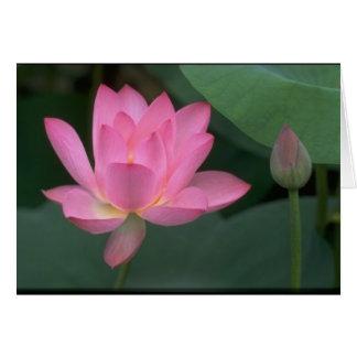Lirio rosado de la condolencia tarjeta de felicitación