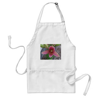 Lirio rosado del jardín delantal