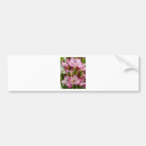 Lirio rosado etiqueta de parachoque