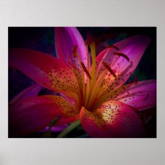 Lirio rosado hermoso póster