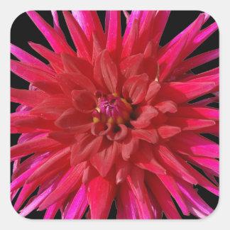 Lirio rosado pegatina cuadrada
