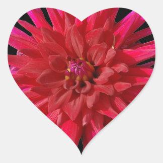 Lirio rosado pegatina en forma de corazón