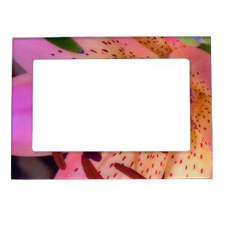 Lirio rosado suave marcos magneticos de fotos