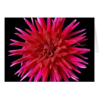 Lirio rosado tarjeta de felicitación
