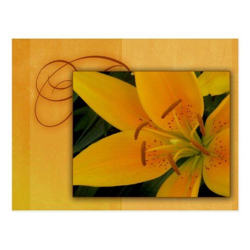 Lirio tigrado amarillo de oro para la caída tarjeta postal