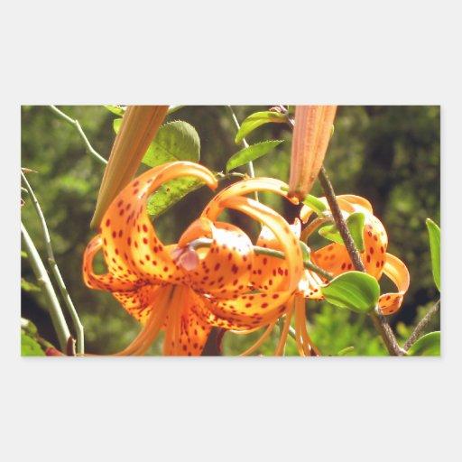 Lirio tigrado anaranjado rectangular pegatinas