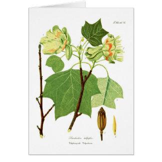 Liriodendron tulipifera card