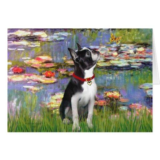 Lirios #2 - Boston Terrier 2 Felicitacion