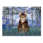 Lirios 6 - Gato de tigre del Tabby 30 Postales