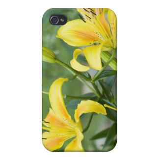 Lirios amarillos iPhone 4/4S funda