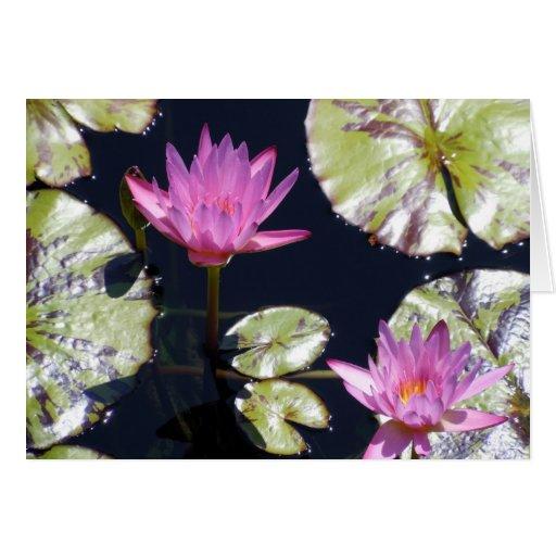 Lirios de agua rosados tarjeta de felicitación