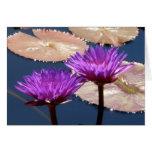 Lirios de agua violetas tarjeta